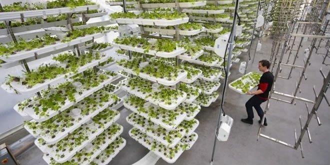 Yeni İş Modeli Dikey Topraksız Tarım
