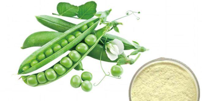 Yeni İş Fikri: Bitkisel Bazlı Organik Protein Üretimi