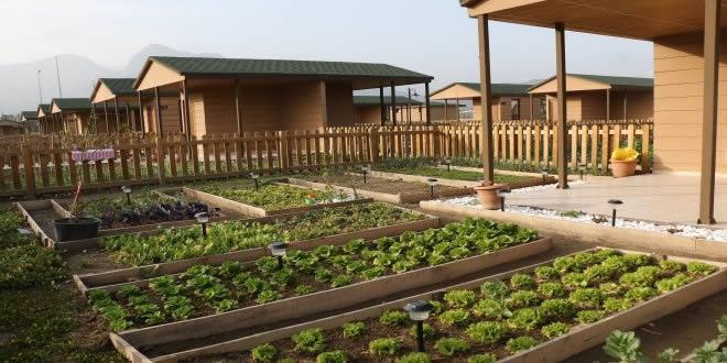 Hobi Bahçesi Kiralamak (Belediyelerin hobi behçeleri)