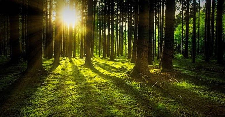 Orman yatırımcısına 202 milyon TL kredi hibe desteği