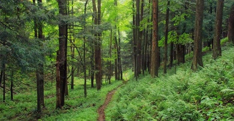 Orman Köylüsüne Verilecek Destekler 2021