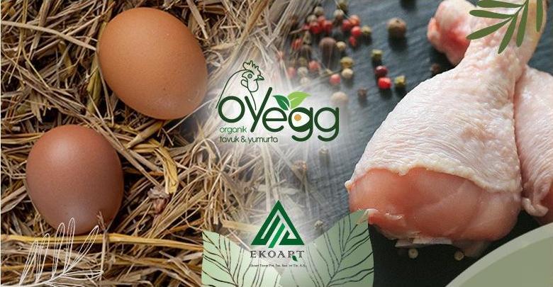 OYEGG Organik Tavuk Yumurtaları ve Organik Tavuk Etleri Bayiliği